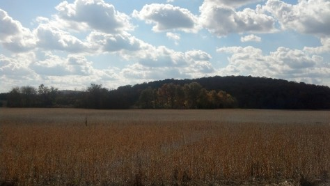 This beautiful field is the first thing you see on our road.